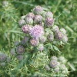 Invasive weeds Picture1
